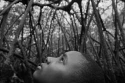 Art and Documentary Photography Blog - Loading Lord of the Mangrove